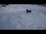 Елки1 + кот Рыжий и Финтифлюшка( Финти)